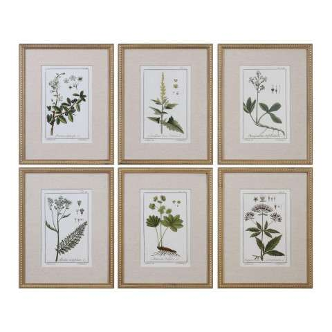Green Floral Botanical Study Prints S/6
